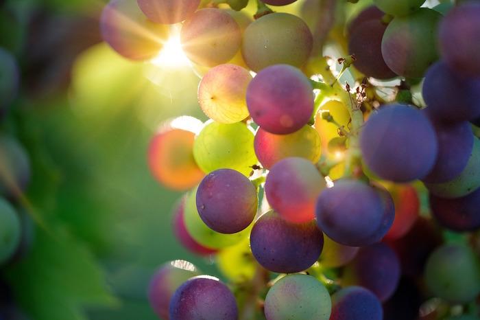 Cure de raisin et perte de poids : bienfaits.