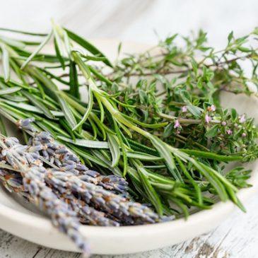 Maigrir grâce à la tisane de romarin : une infusion dépurative pour la perte de poids
