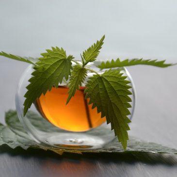 Maigrir avec le thé vert : les bienfaits de la célèbre plante sur la perte de poids