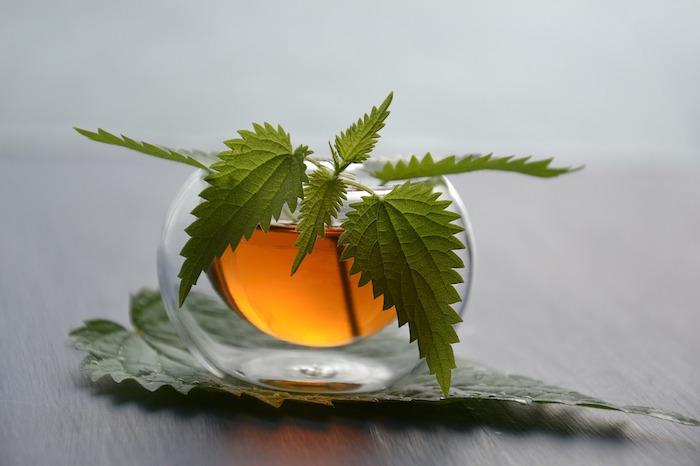 Toutes les vertus du thé vert sur la perte de poids !