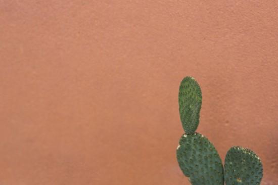 Le nopal : tout savoir sur ce cactus qui nous veut du bien.